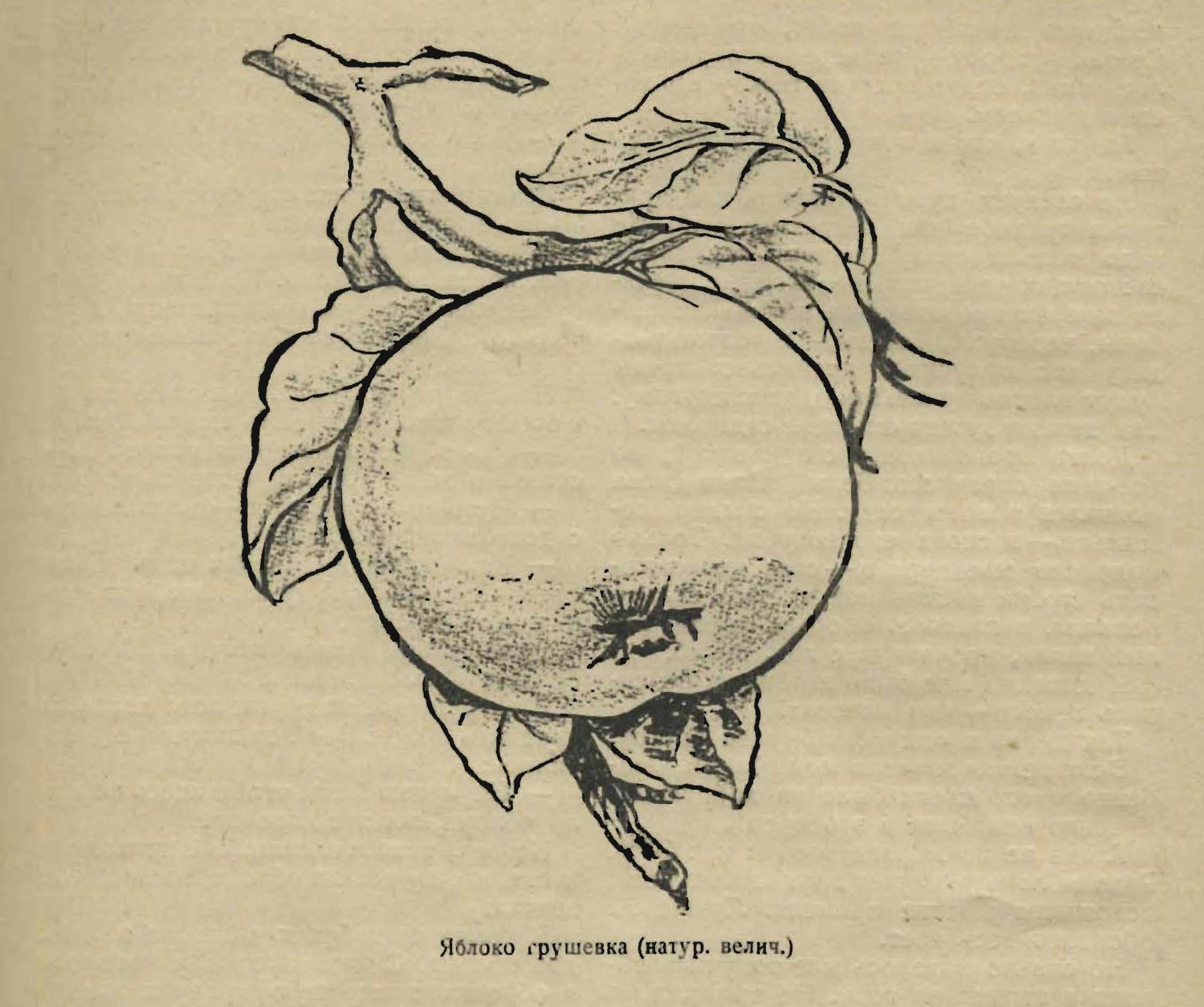 3 путь яблочного следопыта 10