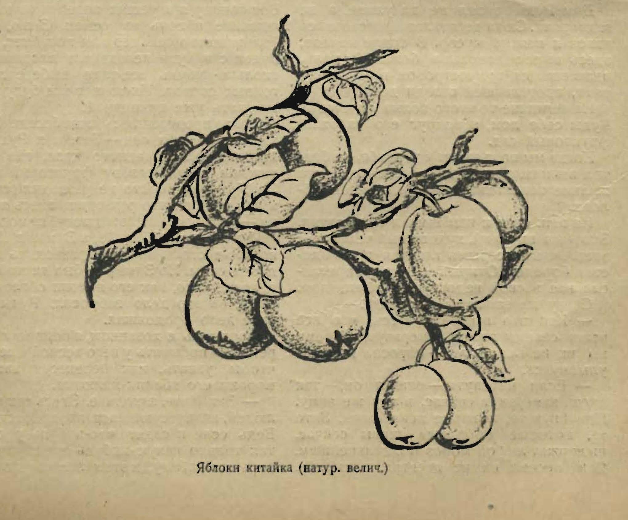 3 путь яблочного следопыта 4