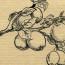 Путь яблочного следопыта