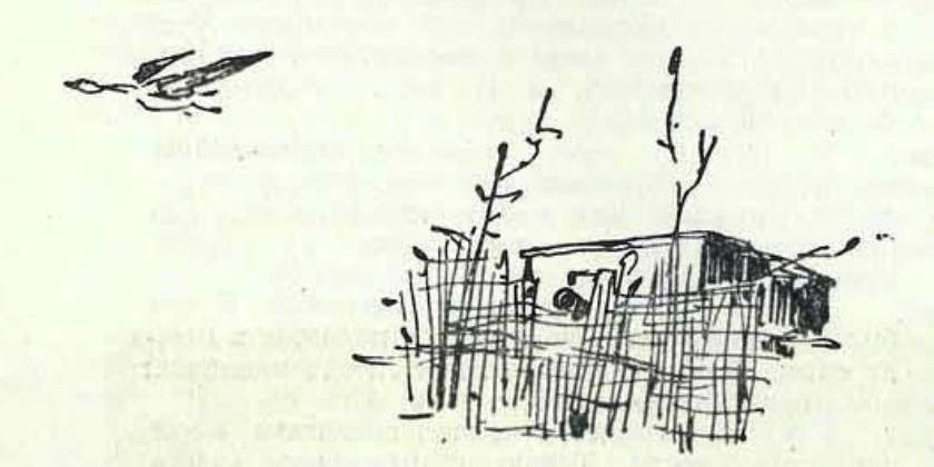 Поединок с дикой уткой