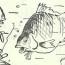 Рыбьи портреты