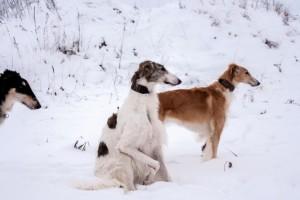 для выставки охотничьих собак на Майский экстрим 2016