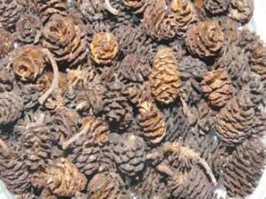 Лекарственные растения Майский экстрим  ольха