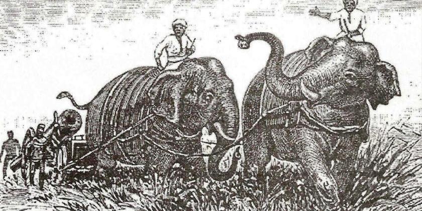 Слоны и пиррова победа