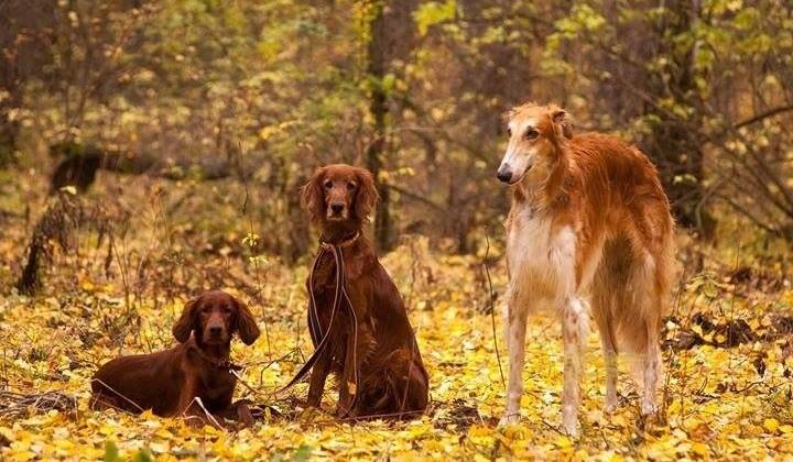 выставка охотничьих собак, Майский экстрим