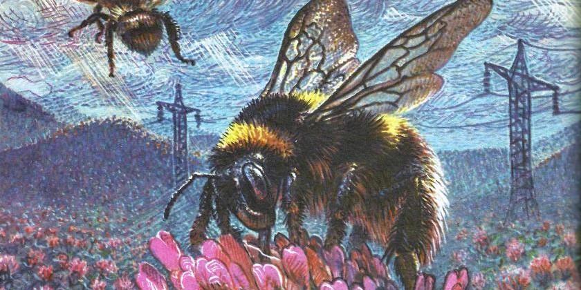В стране насекомых