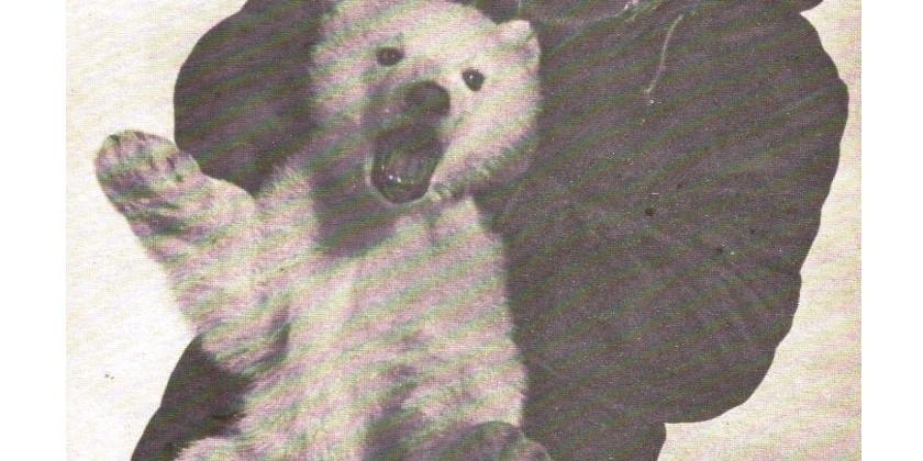 Среди белых медведей