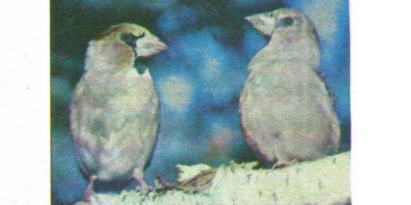 В гости к птицам