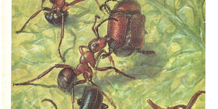 В мире насекомых