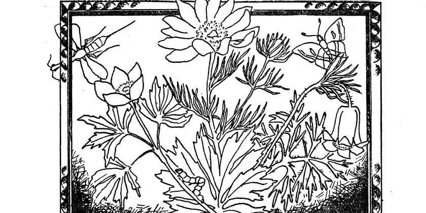 Новеллы о растениях