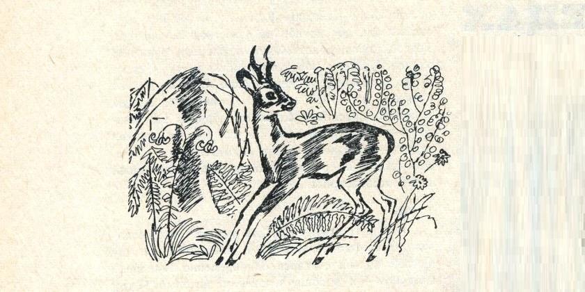 Из книги природы
