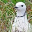 Жар-птица Севера