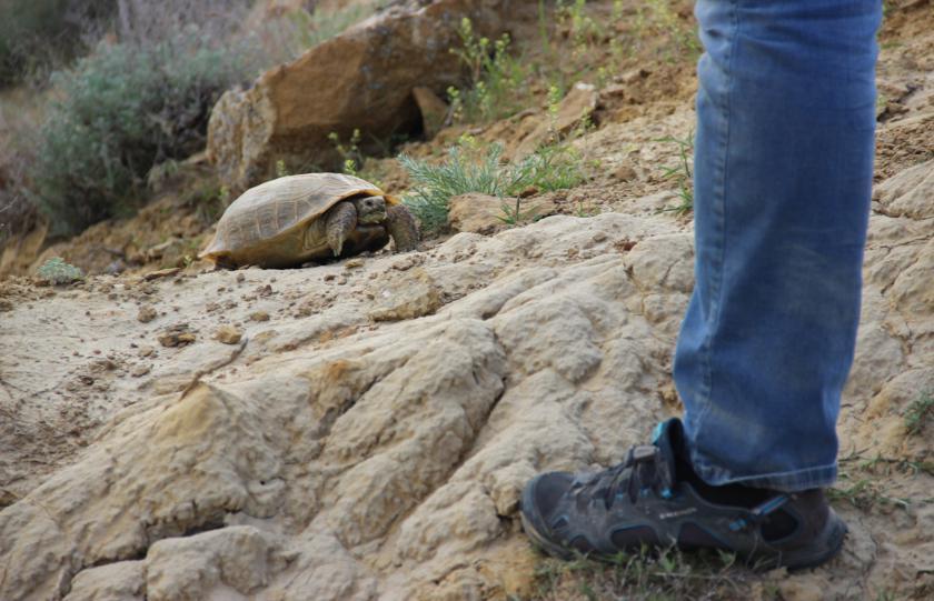 Влияют ли черепахи на опрокидывание конкреций
