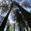 2020-03 Жизнь леса